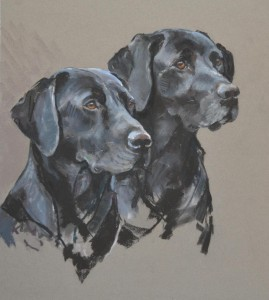 A pair of labs - pastel on paper